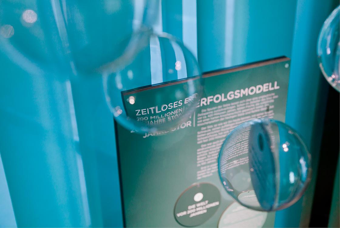 Ausstellungsgestaltung: Faszinarium Stör im Haus des Gastes Wendisch Rietz
