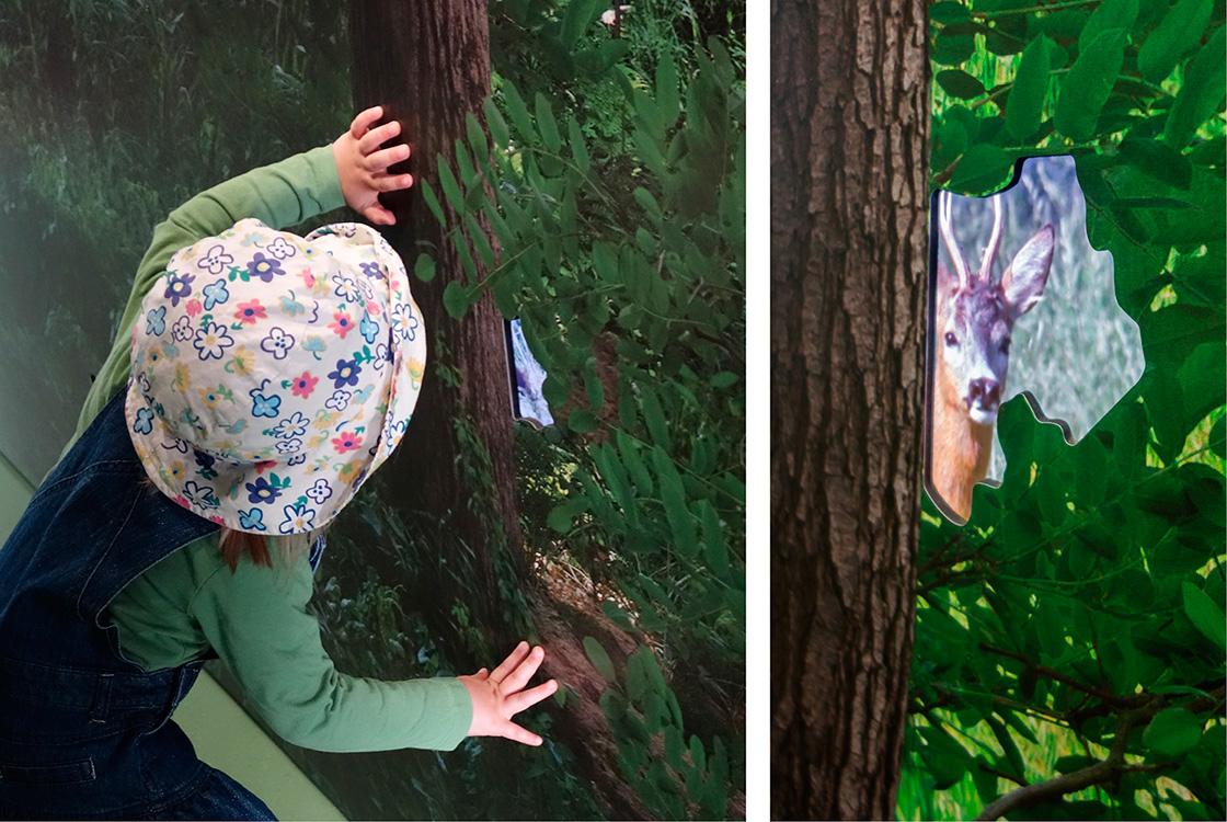 Ausstellungsgestaltung: Ein Stück Wildnis Döberitzer Heide Heinz Sielmann Stiftung 14
